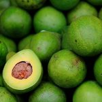 EL MERCADO GLOBAL DE LOS AGUACATES